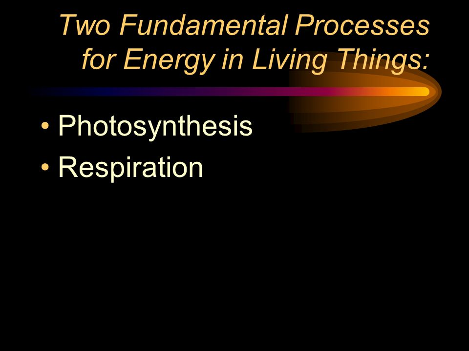 Two Fundamental Processes for Energy in Living Things: