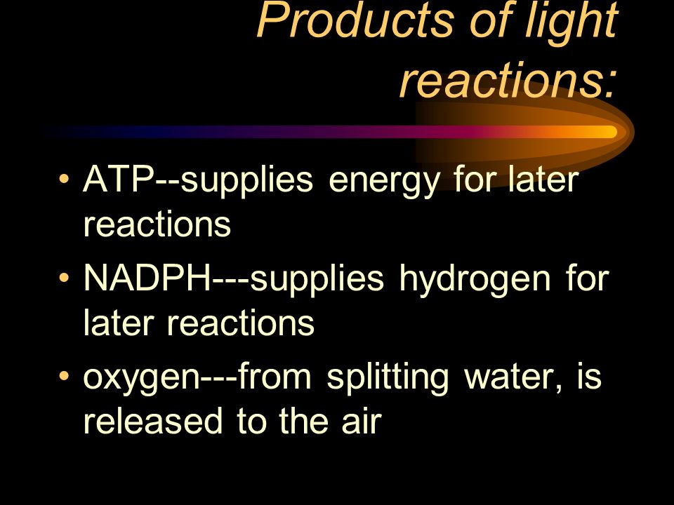 Products of light reactions:
