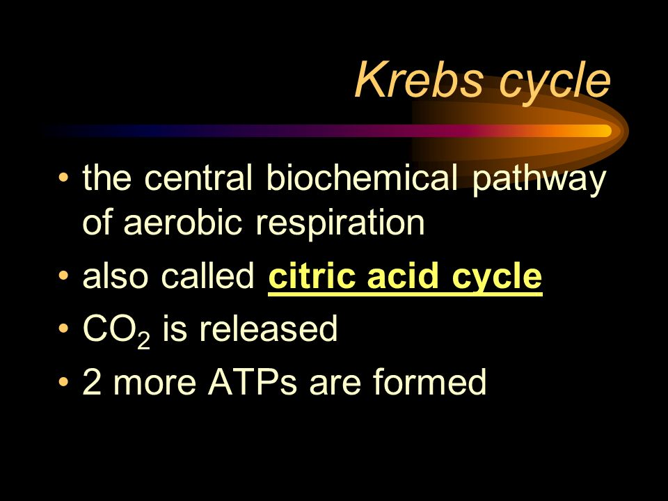 Krebs cycle the central biochemical pathway of aerobic respiration