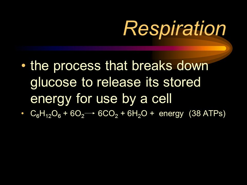 Respiration the process that breaks down glucose to release its stored energy for use by a cell.