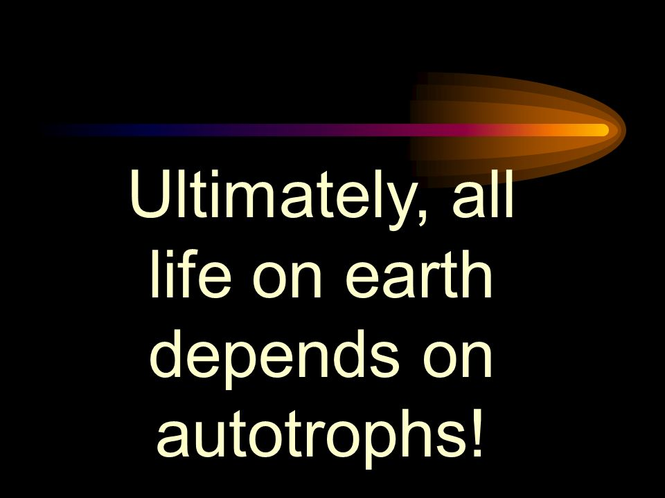 Ultimately, all life on earth depends on autotrophs!