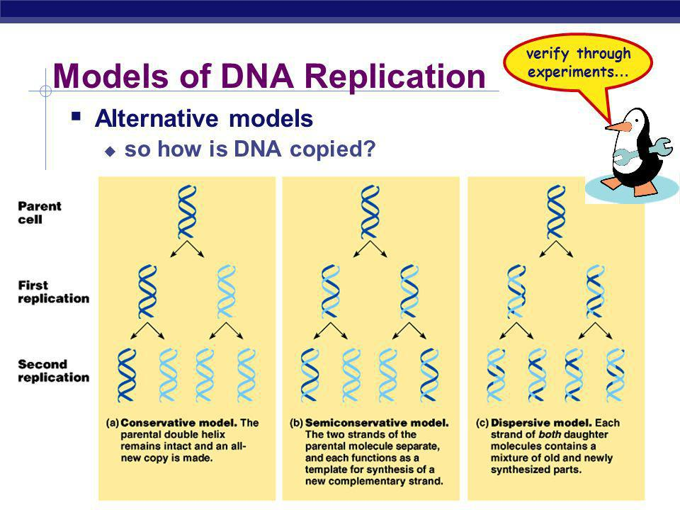 Models of DNA Replication