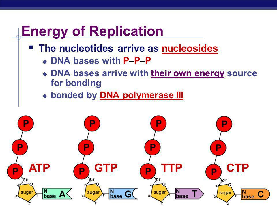 Energy of Replication ATP GTP TTP CTP