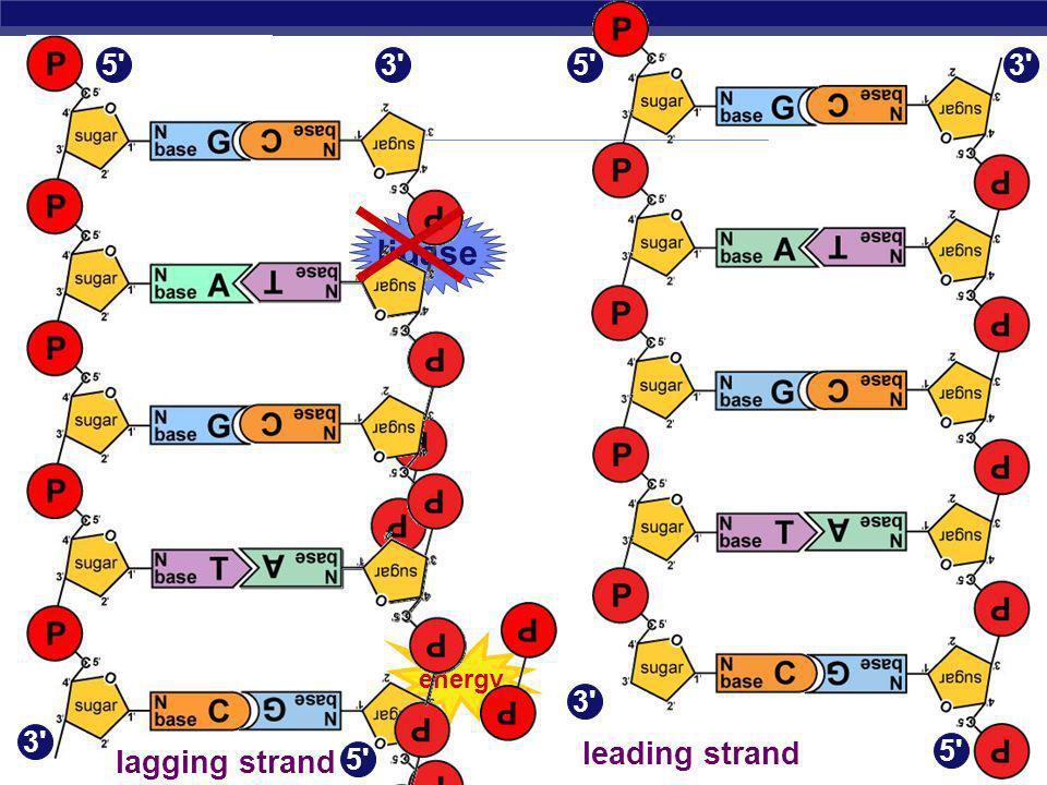 ligase leading strand lagging strand 5 3 5 3 3 3 5 5 energy