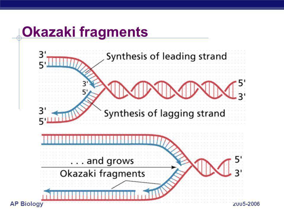 Okazaki fragments 2005-2006