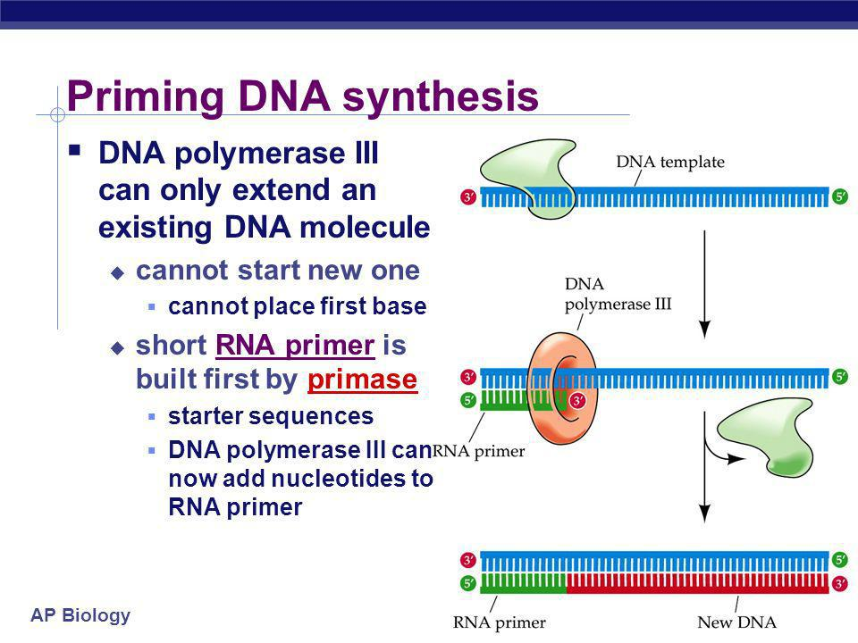 Priming DNA synthesis DNA polymerase III can only extend an existing DNA molecule. cannot start new one.