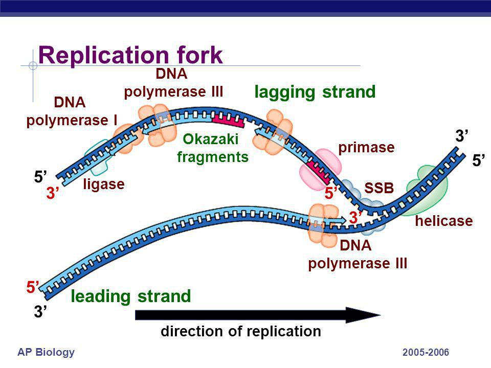direction of replication