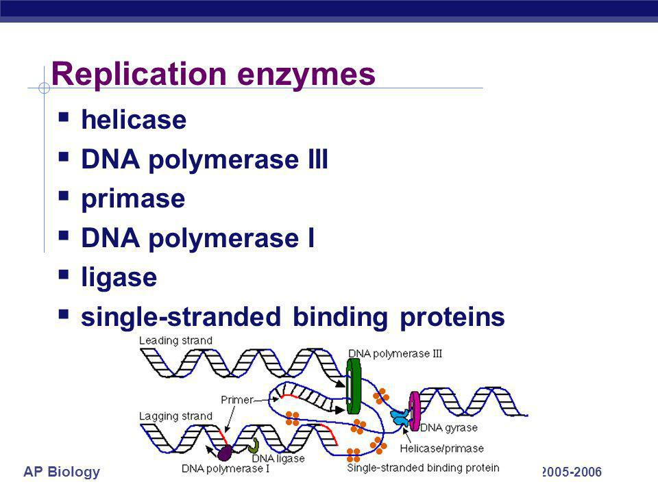 Replication enzymes helicase DNA polymerase III primase