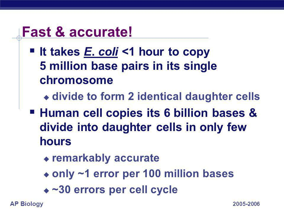 Fast & accurate! It takes E. coli <1 hour to copy 5 million base pairs in its single chromosome. divide to form 2 identical daughter cells.