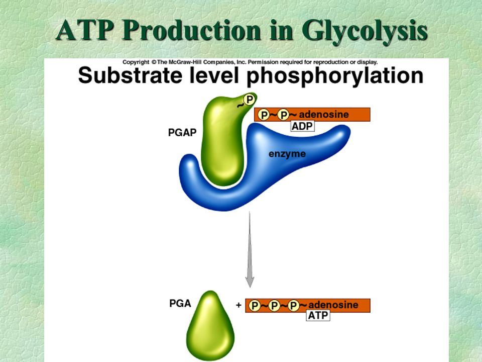 ATP Production in Glycolysis