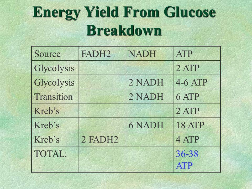 Energy Yield From Glucose Breakdown