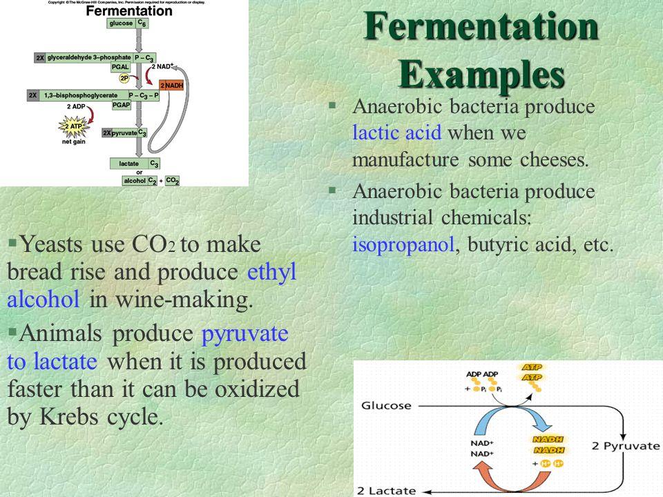 Fermentation Examples