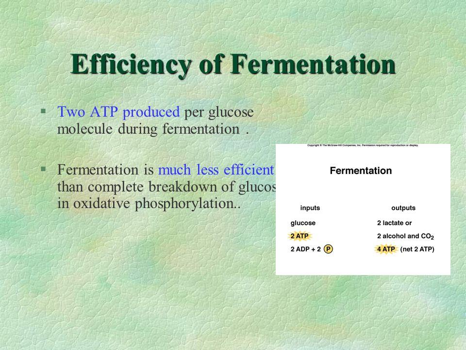 Efficiency of Fermentation