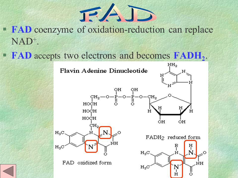 FAD FAD coenzyme of oxidation-reduction can replace NAD+.