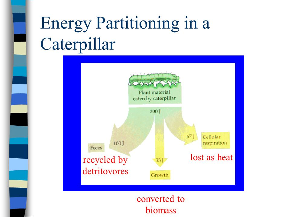 Energy Partitioning in a Caterpillar