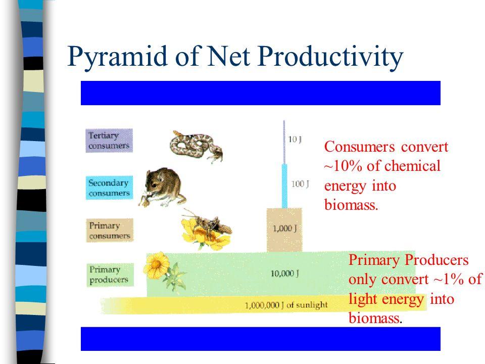Pyramid of Net Productivity