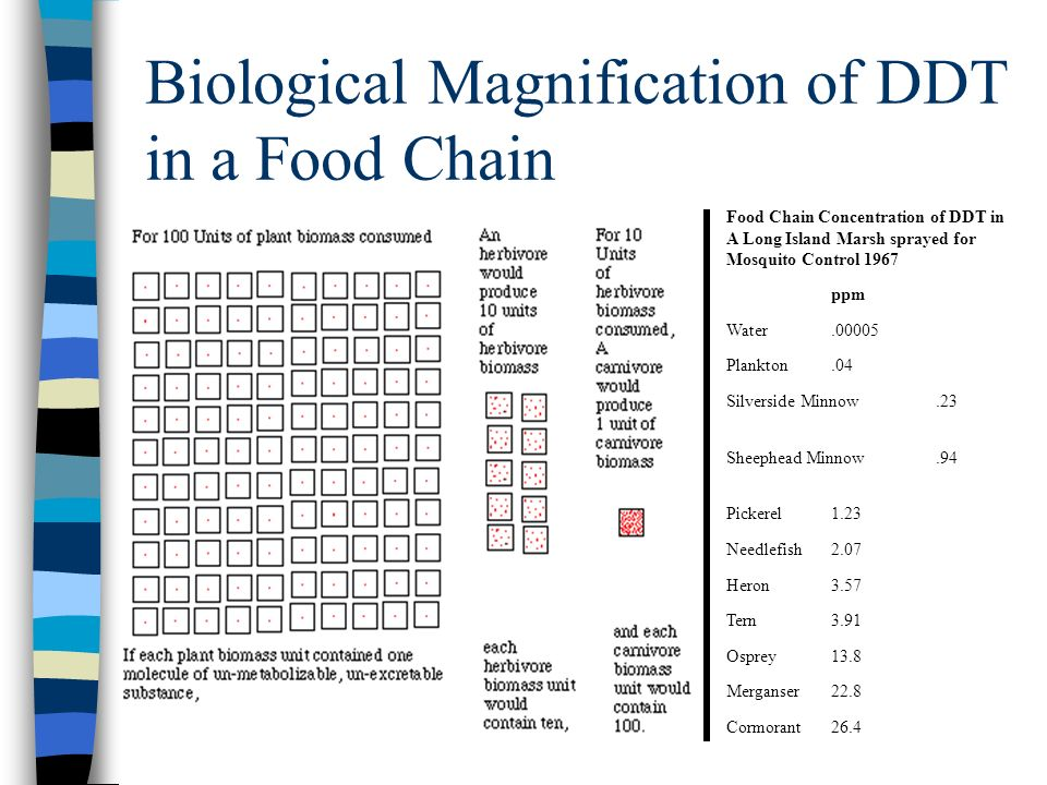 Biological Magnification of DDT in a Food Chain