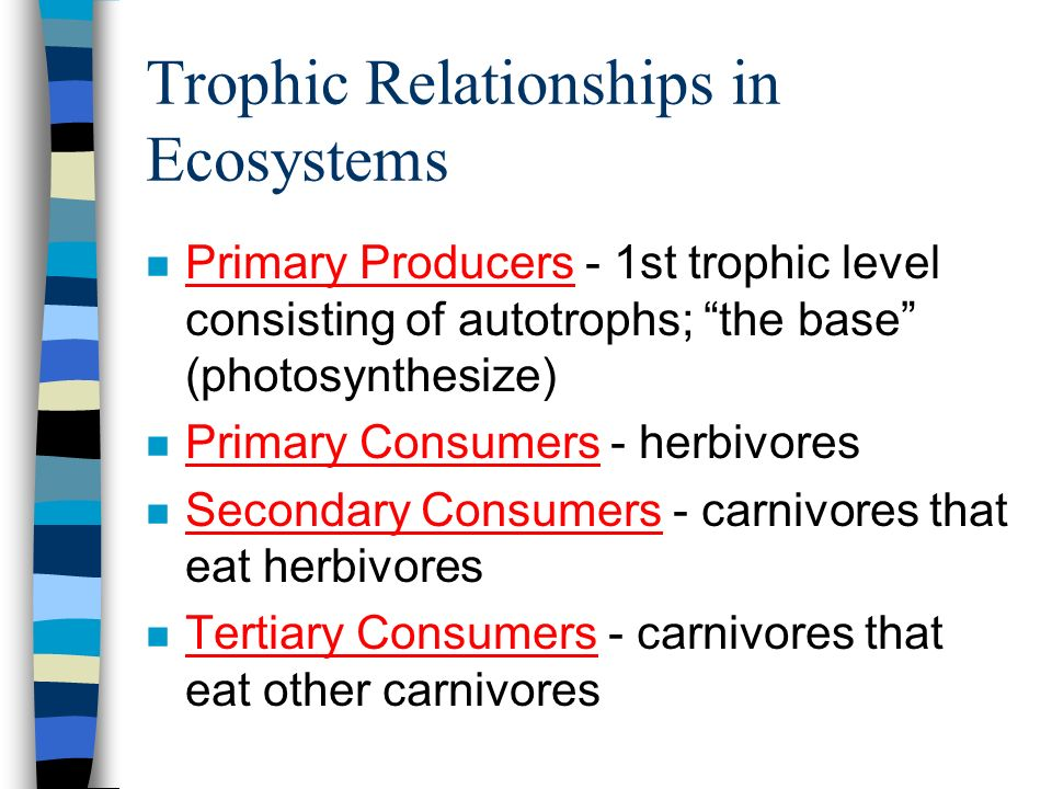 Trophic Relationships in Ecosystems