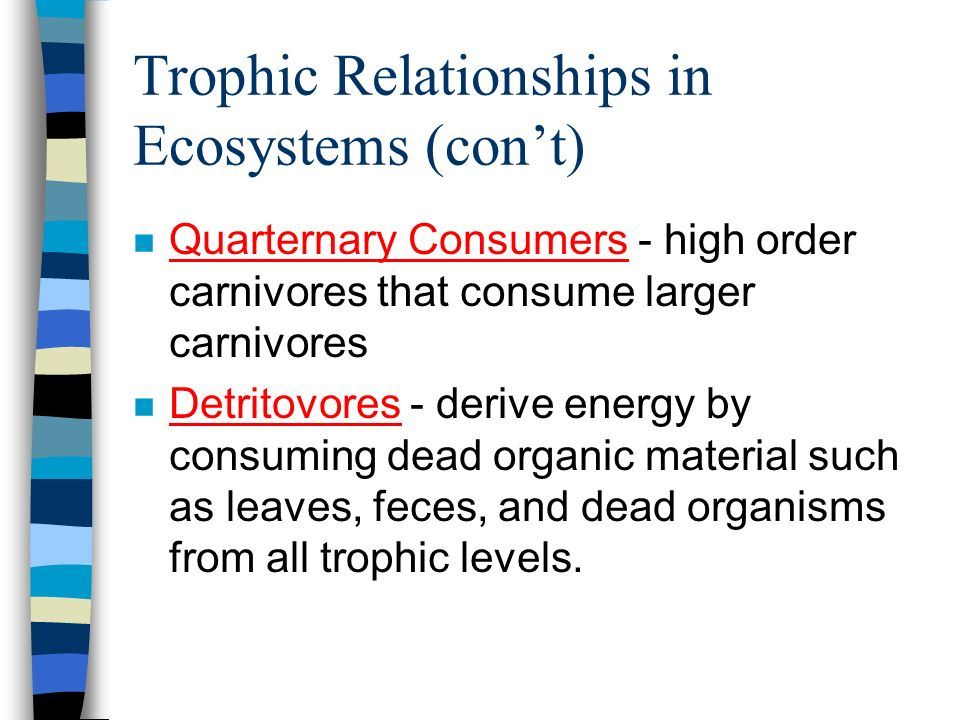 Trophic Relationships in Ecosystems (con't)