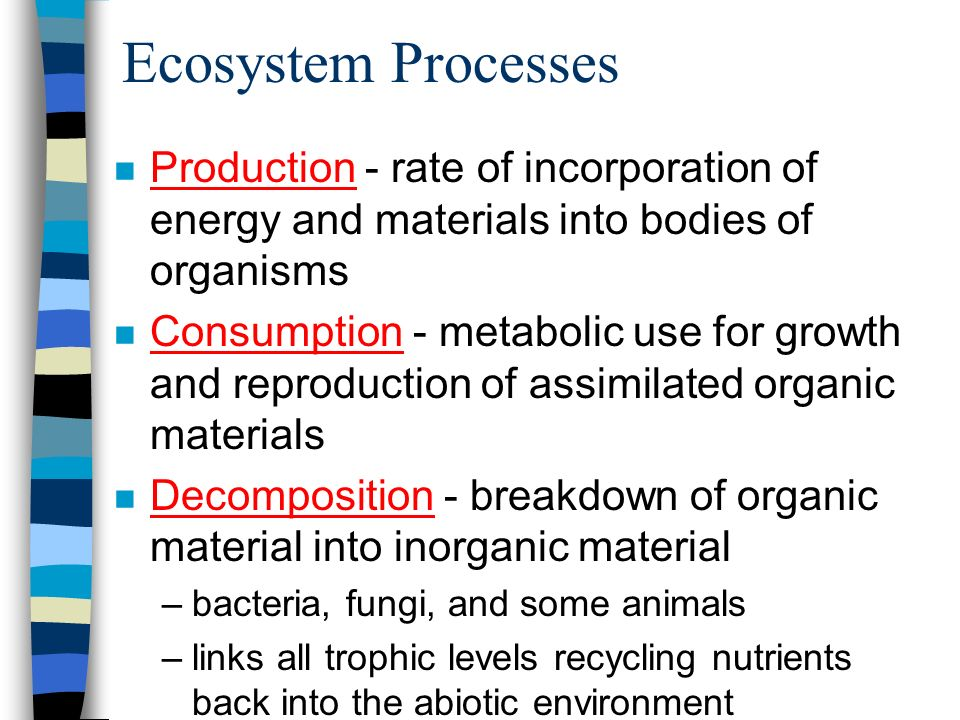 Ecosystem Processes Production - rate of incorporation of energy and materials into bodies of organisms.
