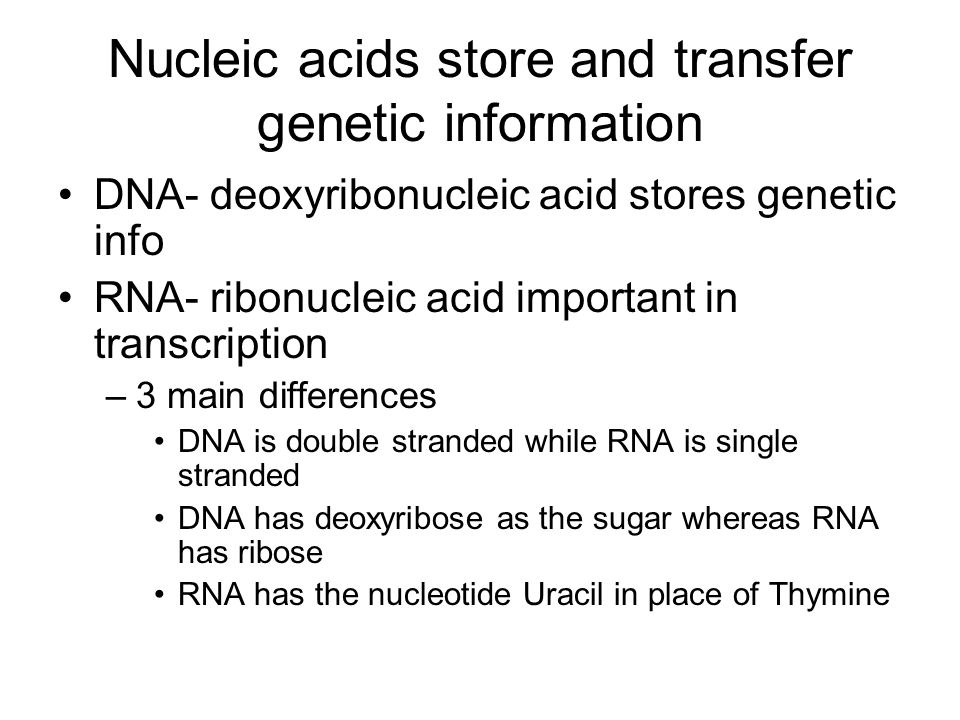 Nucleic acids store and transfer genetic information