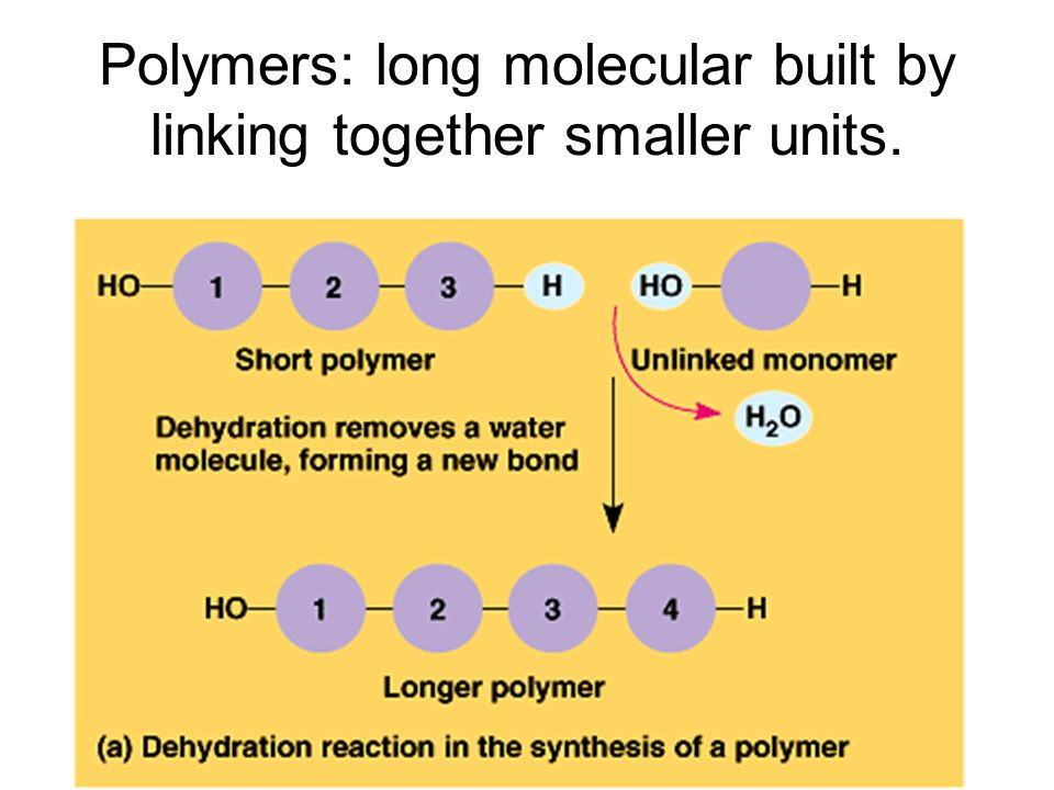 Polymers: long molecular built by linking together smaller units.
