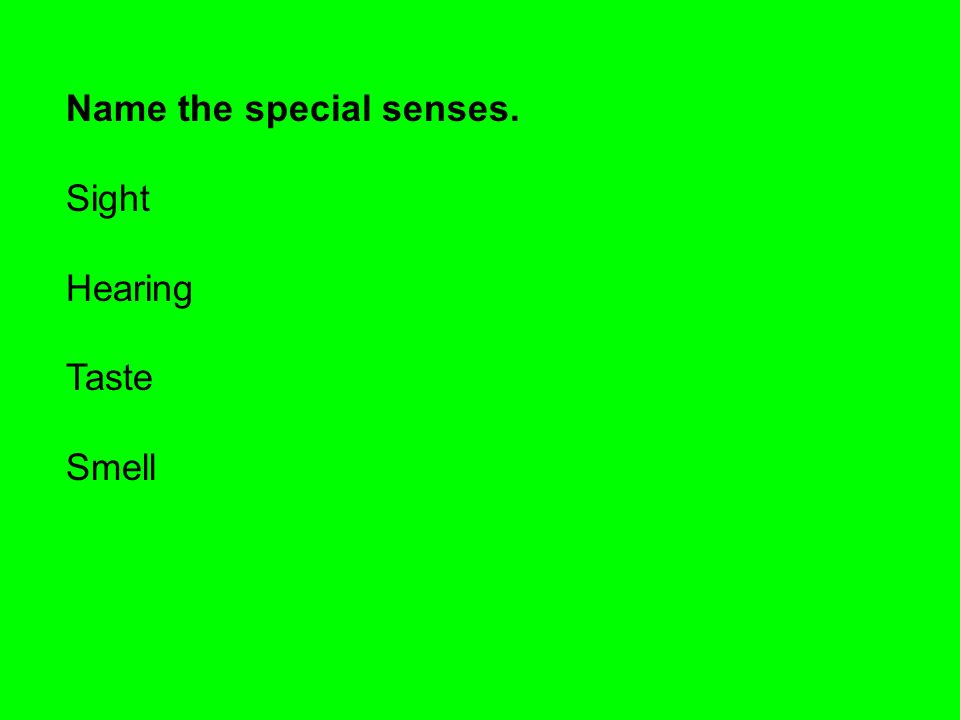 Name the special senses.