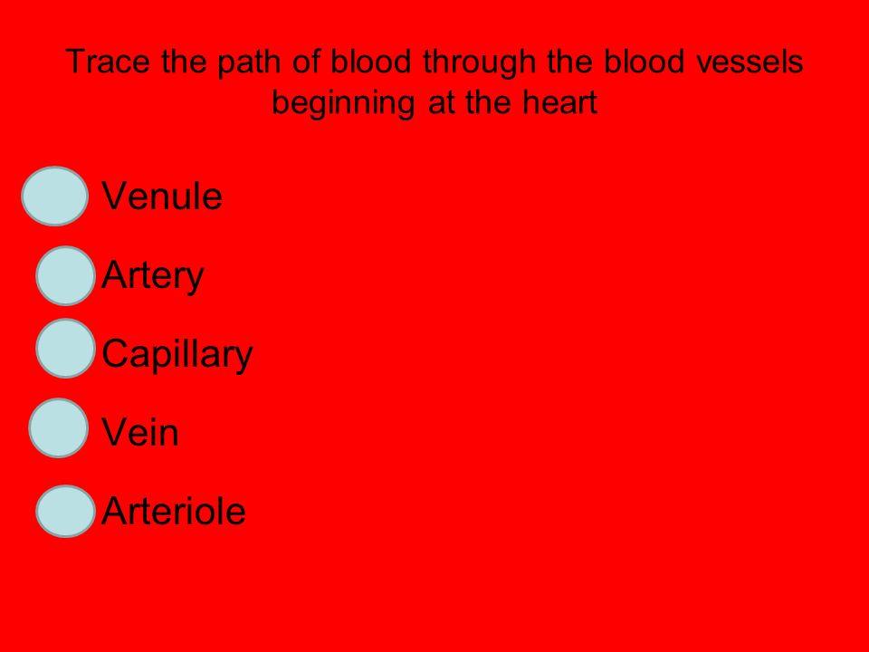 Venule Artery Capillary Vein 2 Arteriole