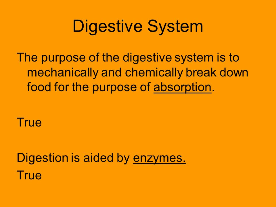 Digestive System The purpose of the digestive system is to mechanically and chemically break down food for the purpose of absorption.