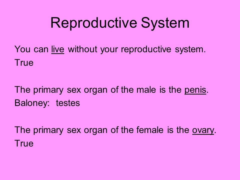 Reproductive System You can live without your reproductive system.