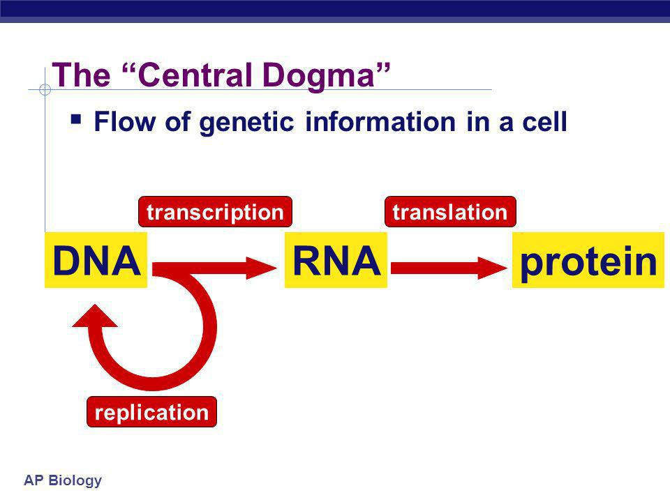 DNA RNA protein The Central Dogma