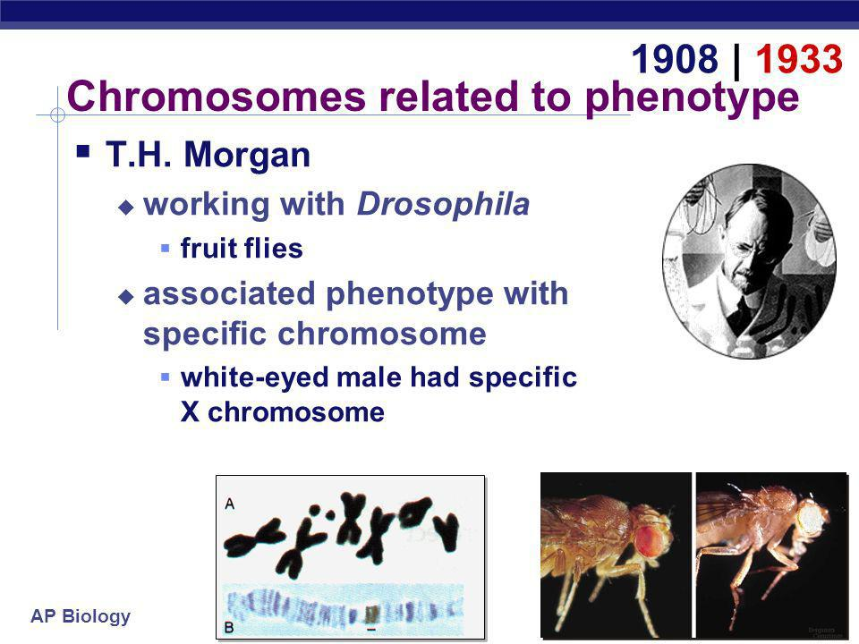 Chromosomes related to phenotype