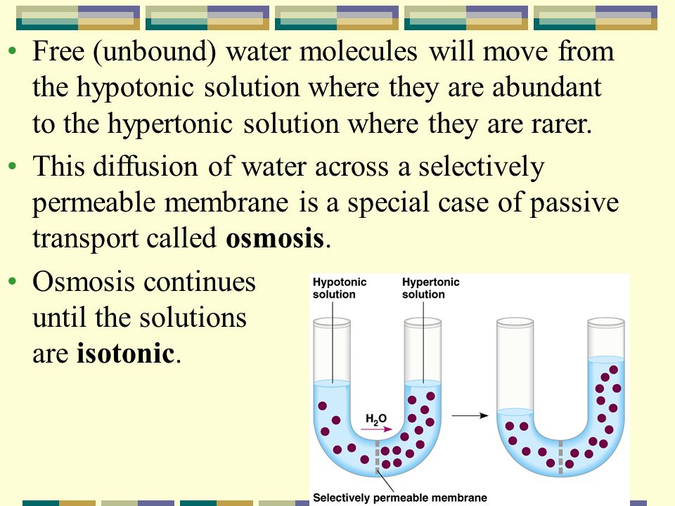 Free (unbound) water molecules will move from the hypotonic solution where they are abundant to the hypertonic solution where they are rarer.