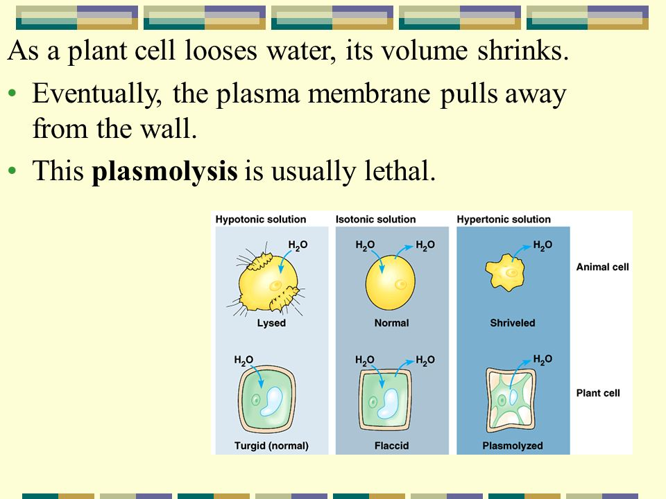 As a plant cell looses water, its volume shrinks.