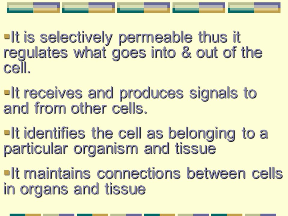 It is selectively permeable thus it regulates what goes into & out of the cell.