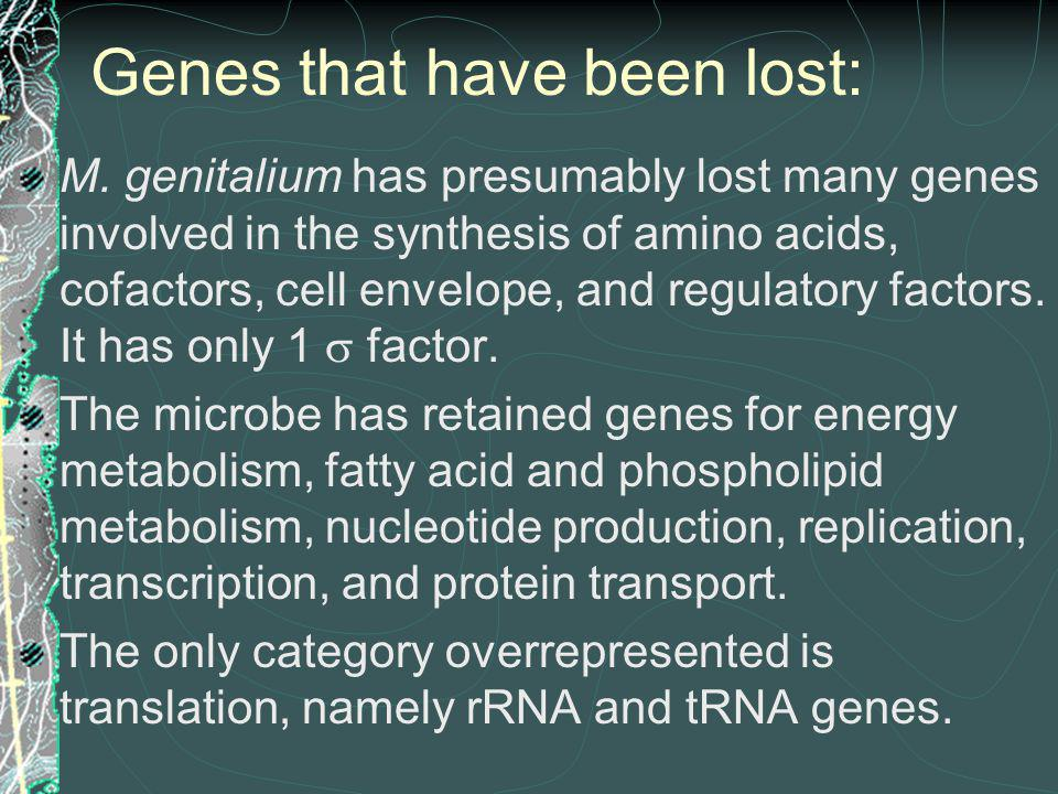 Genes that have been lost: