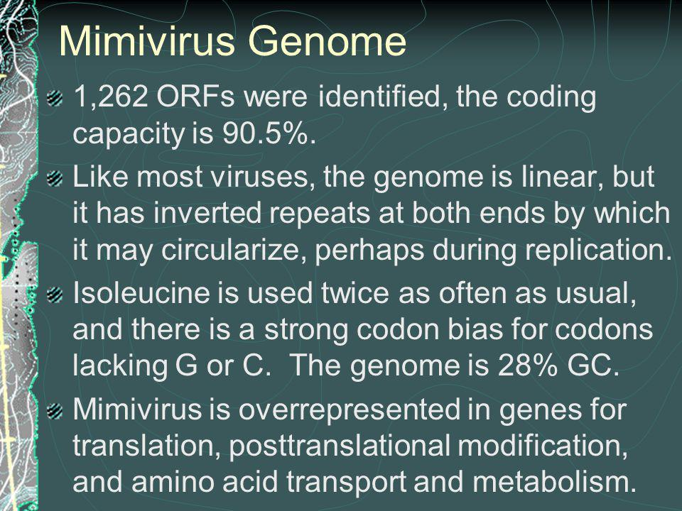 Mimivirus Genome 1,262 ORFs were identified, the coding capacity is 90.5%.