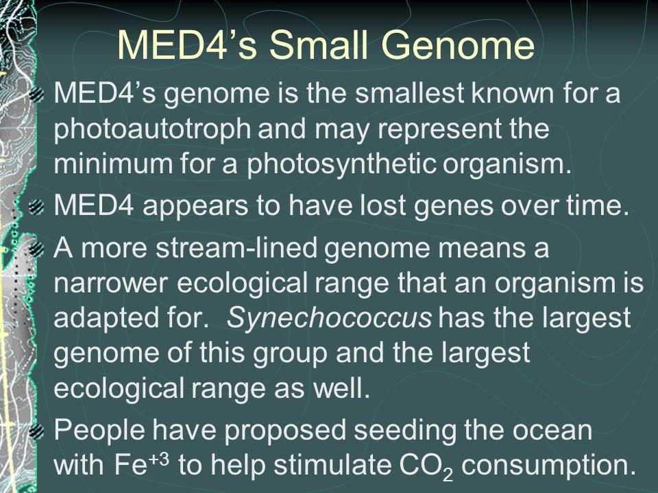 MED4's Small Genome MED4's genome is the smallest known for a photoautotroph and may represent the minimum for a photosynthetic organism.