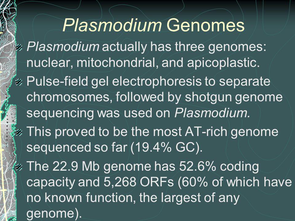 Plasmodium Genomes Plasmodium actually has three genomes: nuclear, mitochondrial, and apicoplastic.