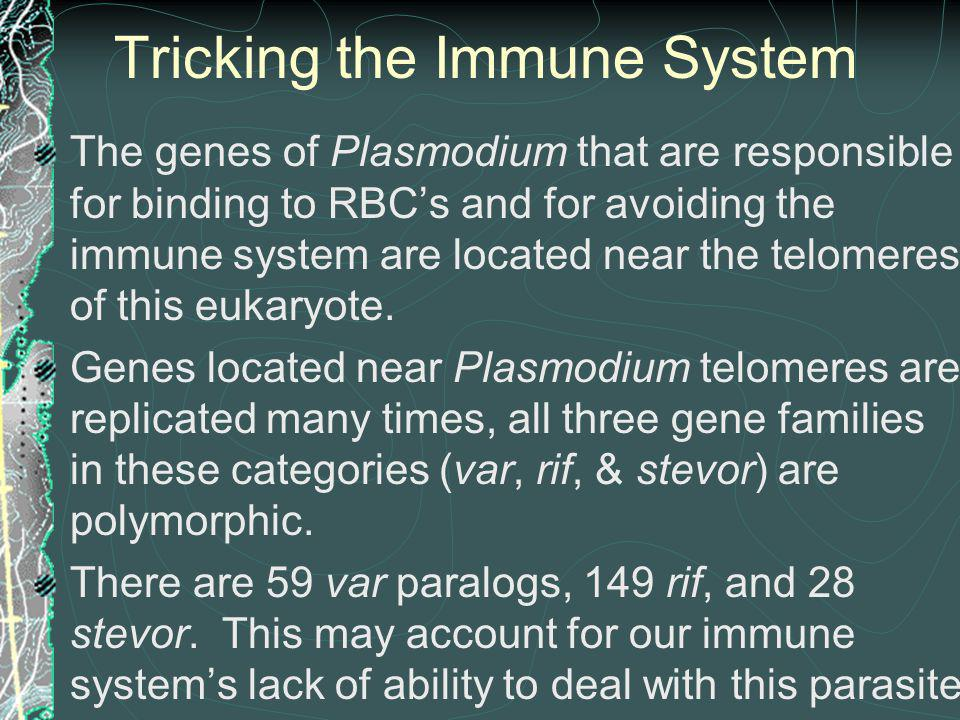Tricking the Immune System
