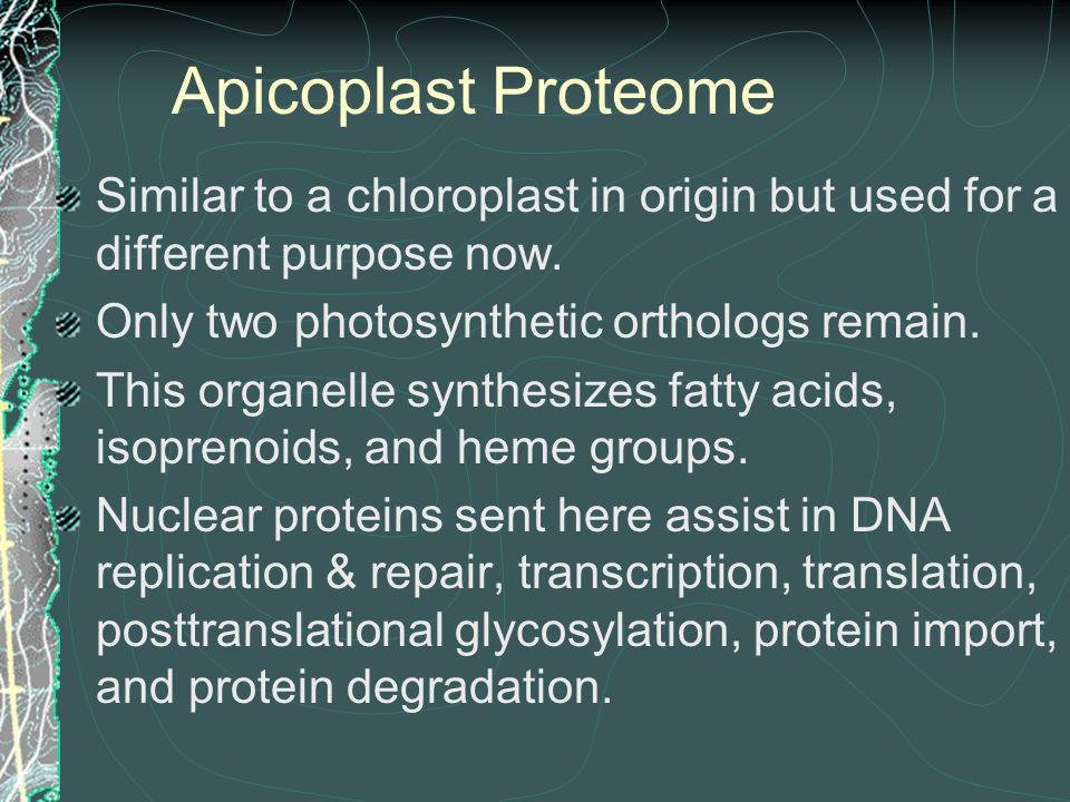 Apicoplast Proteome Similar to a chloroplast in origin but used for a different purpose now. Only two photosynthetic orthologs remain.