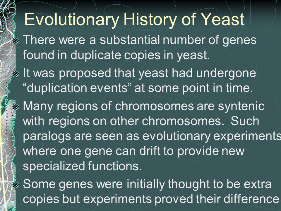 Evolutionary History of Yeast