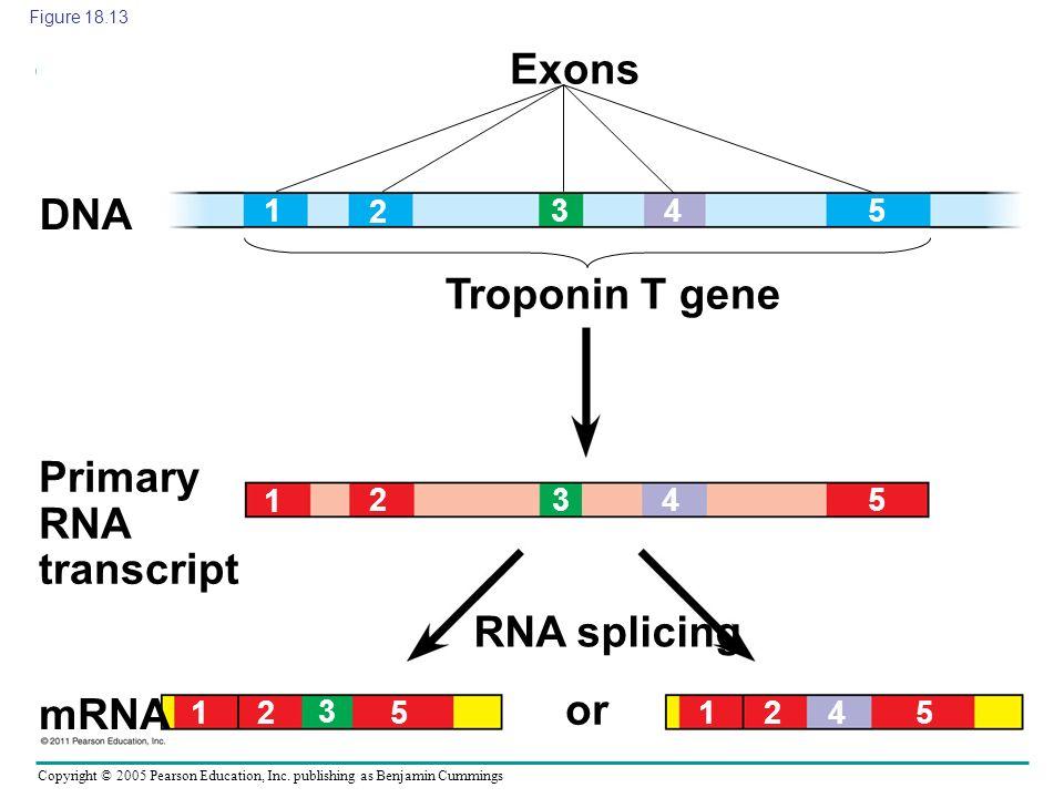Primary RNA transcript