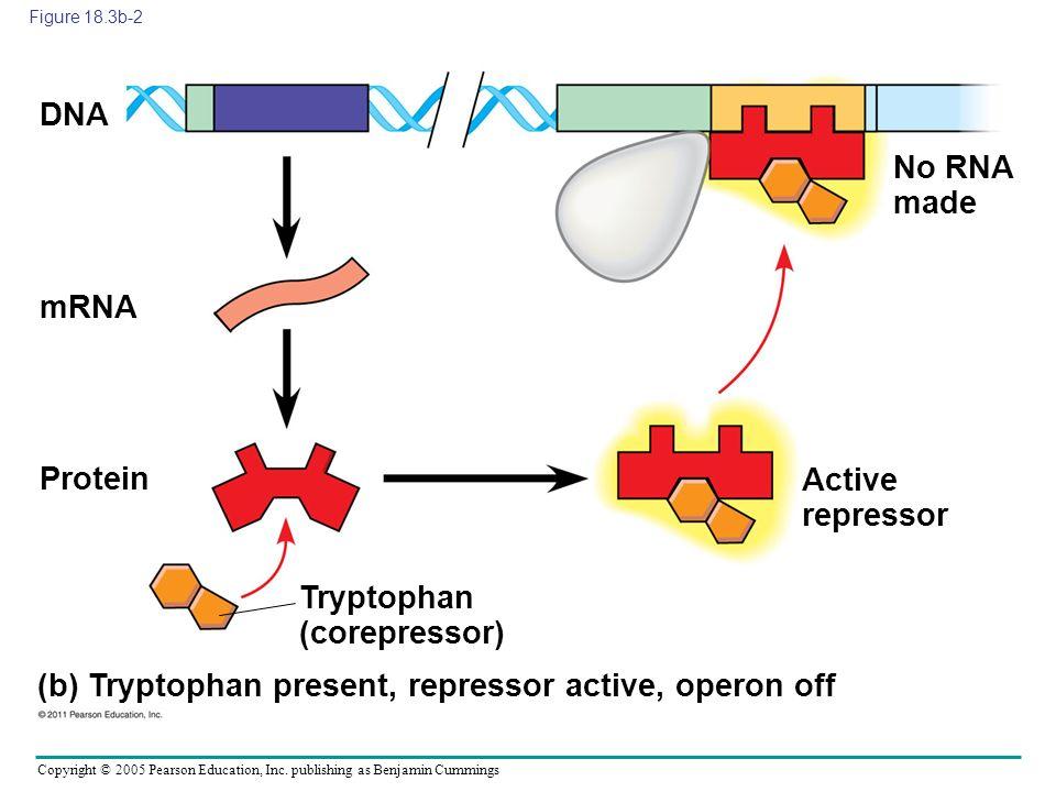 Tryptophan (corepressor)