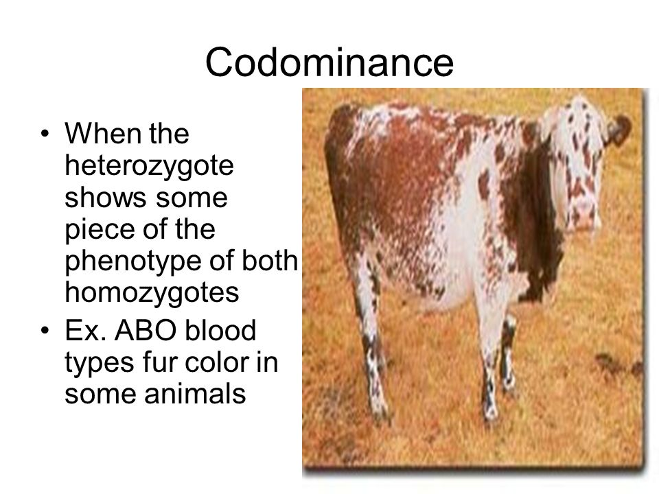 Codominance When the heterozygote shows some piece of the phenotype of both homozygotes.