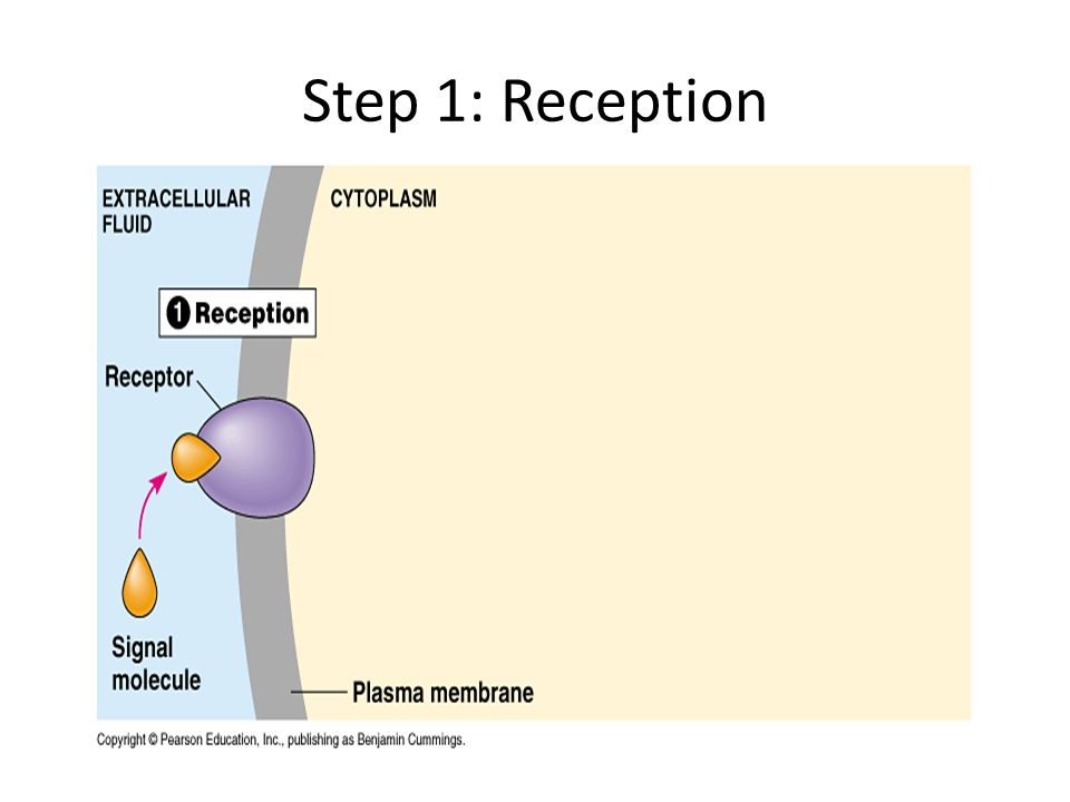 Step 1: Reception