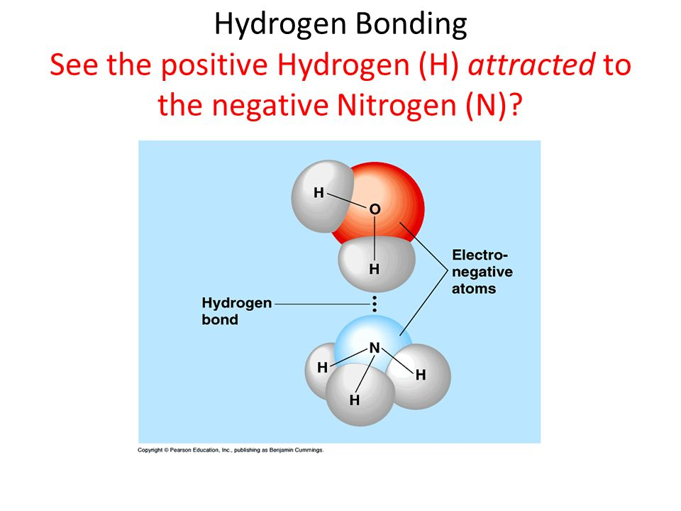 Hydrogen Bonding See the positive Hydrogen (H) attracted to the negative Nitrogen (N)