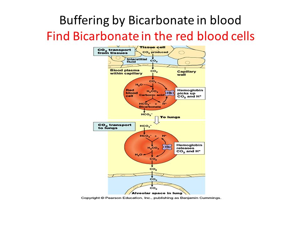 Buffering by Bicarbonate in blood Find Bicarbonate in the red blood cells