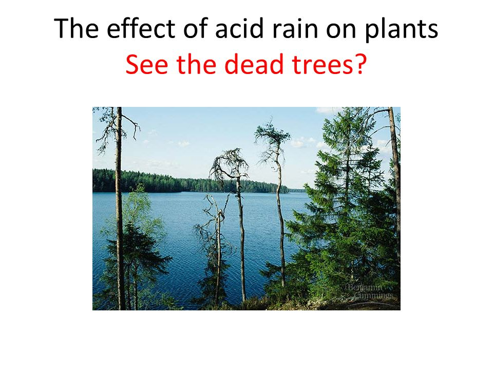 The effect of acid rain on plants See the dead trees