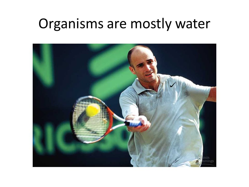 Organisms are mostly water